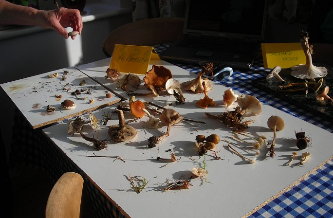 fungi laid out on table